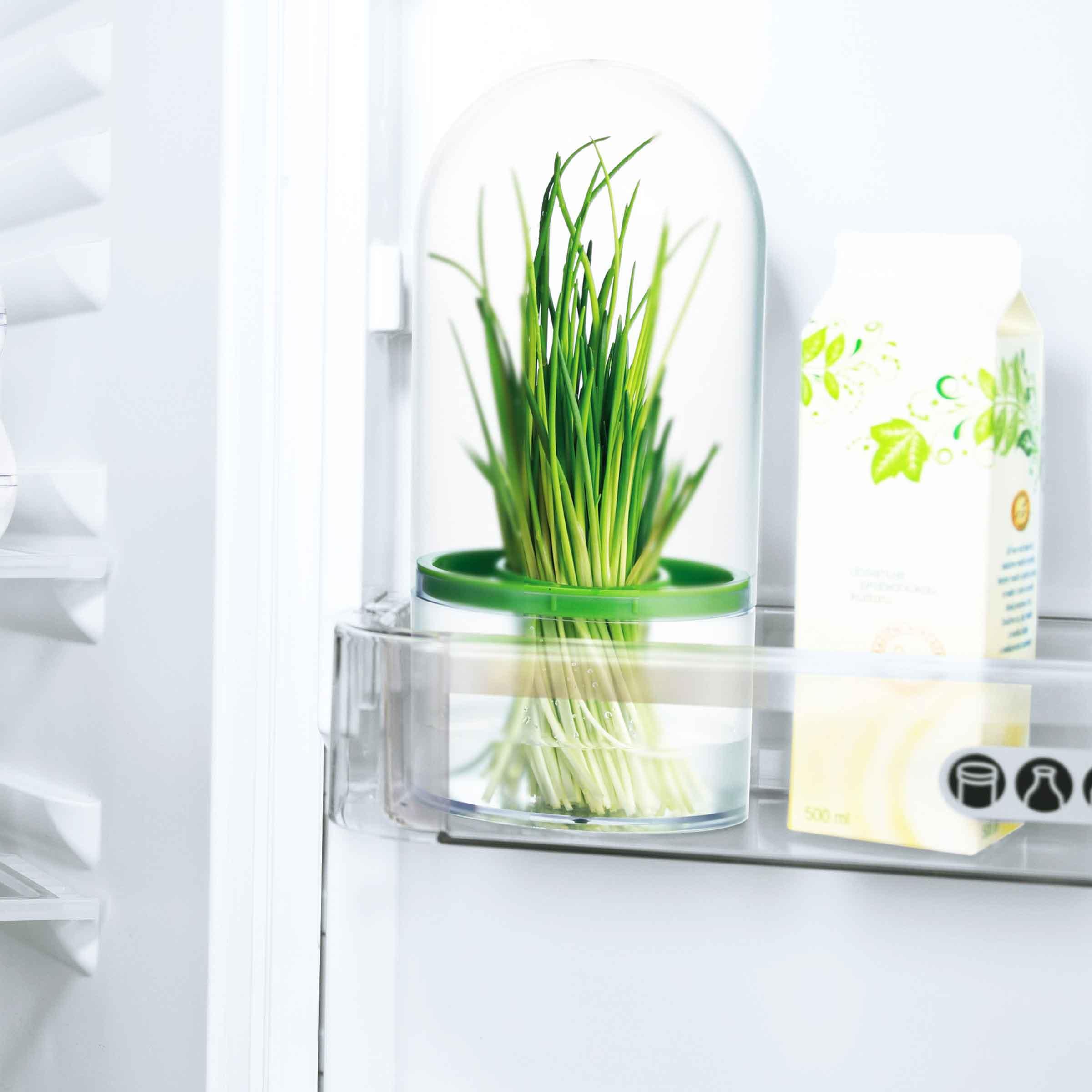 Boîte hermétique en plastique pour conserver les herbes aromatiques ou médicinales